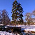 L'eau, la neige et les arbres