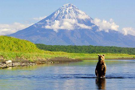 kamchatka-russia-bears-6