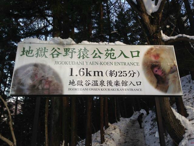 singes entrée