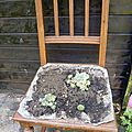 Les chaises succulentes