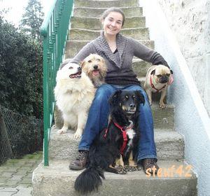 WE_chiens