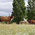 ♥ pour les amoureux des chevaux (5) ♥