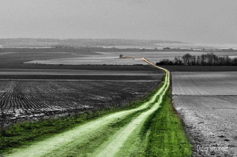 DSC_1189 Le chemin vert