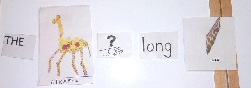 the giraffe has a long neck