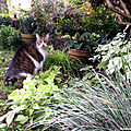 Valeurs sûres au jardin #4