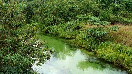 Riviere au Gabon