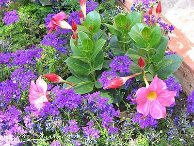 jardin-fleurs