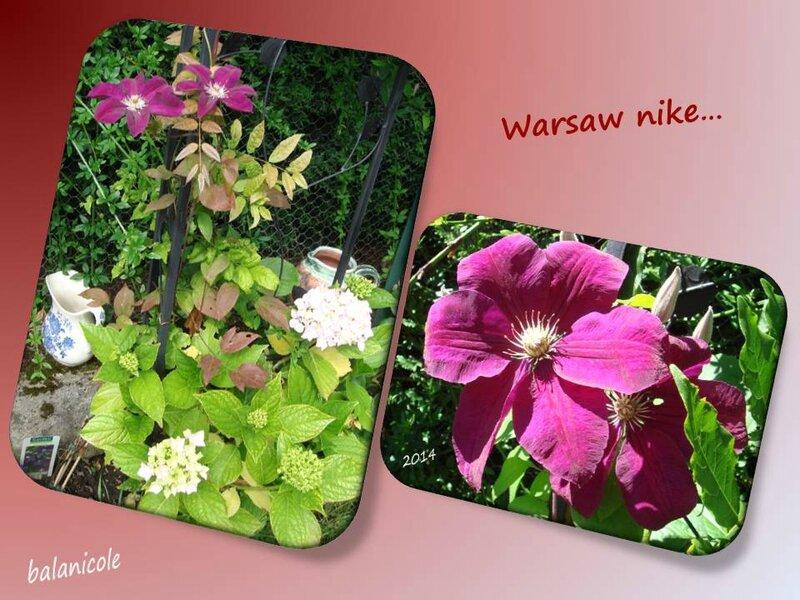 balanicole_2015_30_warsaw nike