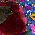 Gaïa, une sieste méritée