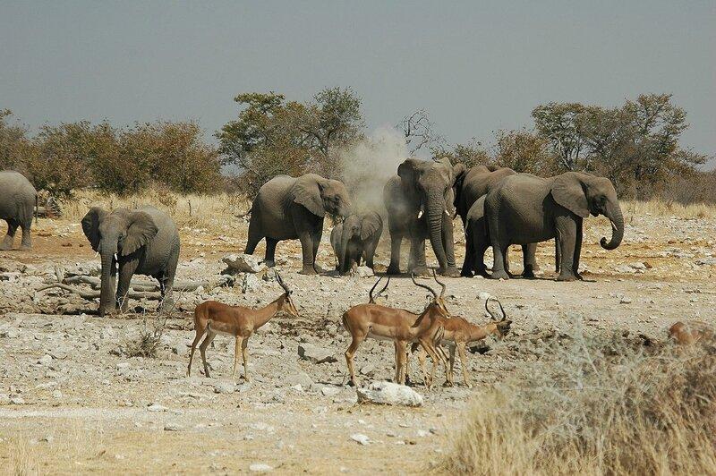 1280px-Namibie_Etosha_Elephant_02