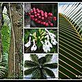 collage plantes