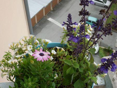 fleurs + tchernobil 002