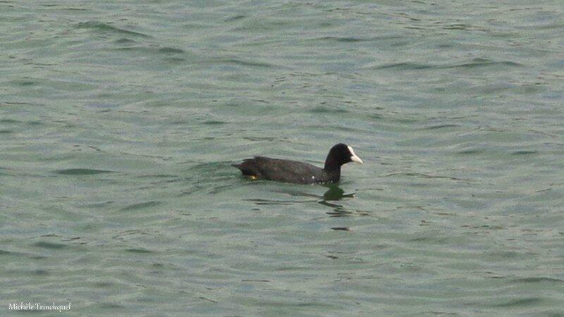 Lac Magnoac 03061616