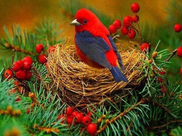 oiseausuz