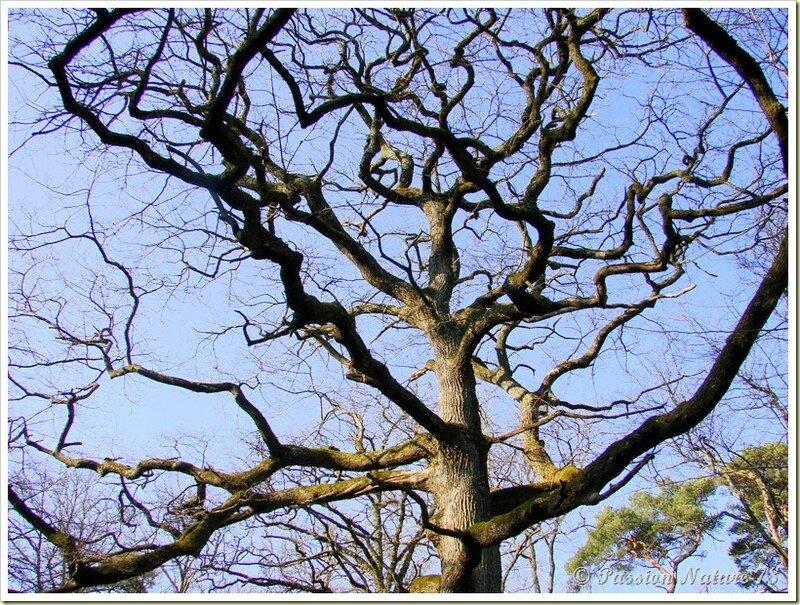 La forêt de Rambouillet vue sous un autre angle (17)