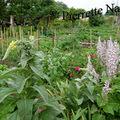 Molène et jardin