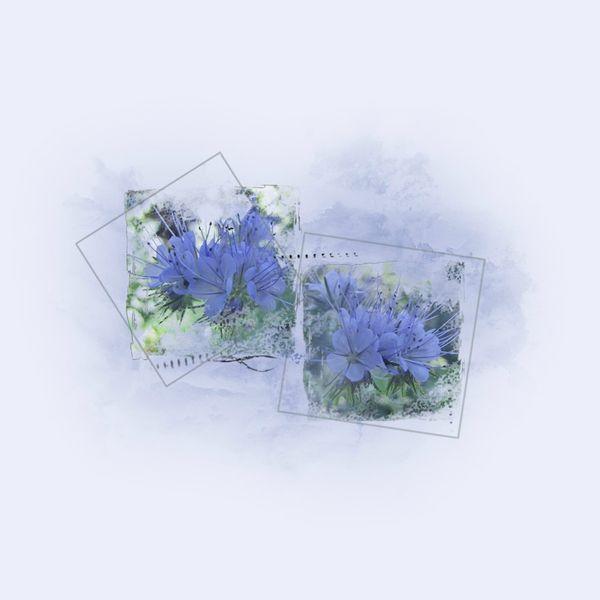 fleur-bleueSans-titre-1_modifié-2