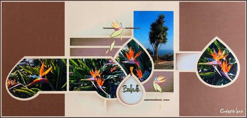 Fleurs de Faial (5)