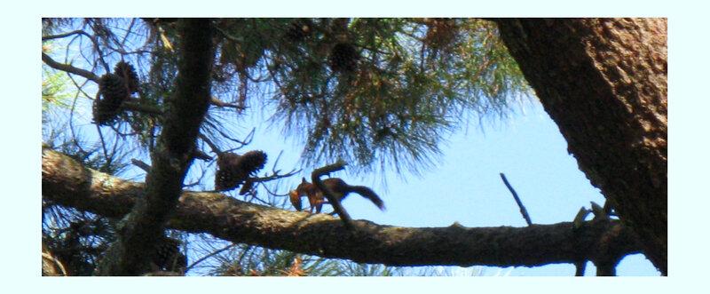 ecureuil-4