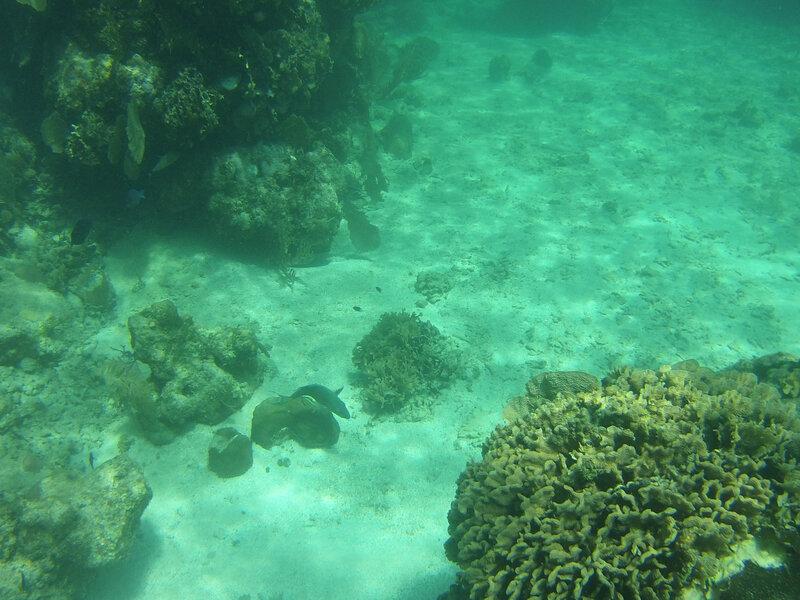 fond sous marin Utila (8)