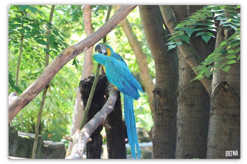 6-tropical-parc-sortie-famille-enfant-kids-bretagne-morbihan-saint-jacut-les-pins-faune-flore-tropicale-animalier-animaux-jardin-spectacle-cactus-bbtma-blog-parents-maman
