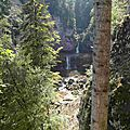 Forêt jurassienne (haut plateau)
