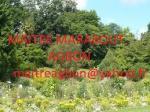 Copie de les plantes du MAITRE AGBON