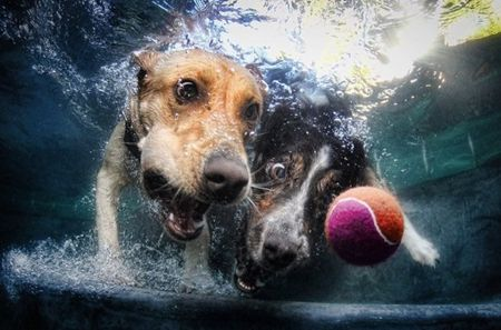 diving_dogs_photography4_550x363