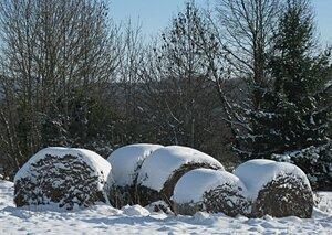 foin_sous_la_neige