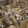 Voyant medium marabout africain sorcier hounsi