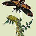 Le papillon de nuit, farouche habitant des airs