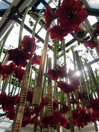 champignons_parc_floral_composition