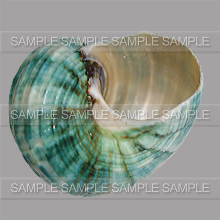 GRAPHIABELLA_SHELLS_ZOOM_04