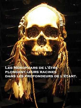 n_nuphars