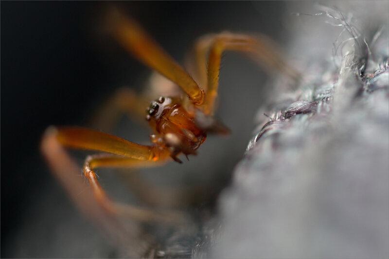 SM araignee face 260518
