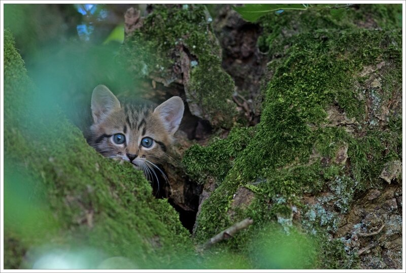 Puits Enfer chat matin 130816 17 regard verdure