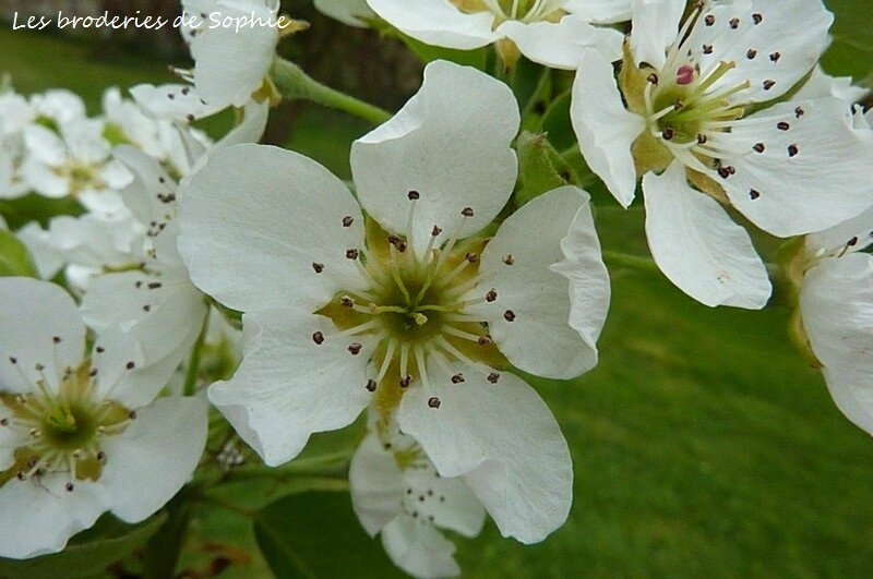 Jardin avril 2014 (10)