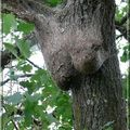 arbre dame