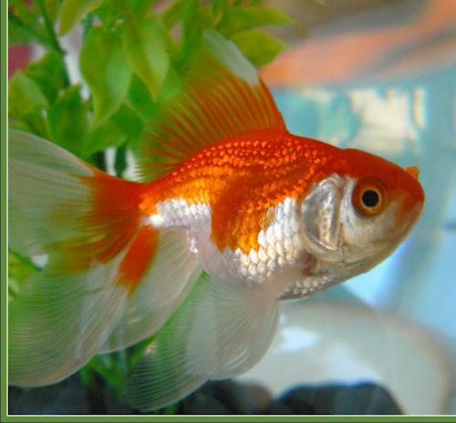 tube poissons 20
