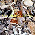 Cortinarius torvus