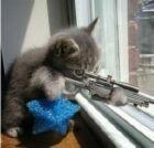 snipercat