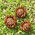 Fleurs de liane - Forêt amazonienne, Sentier de la Montagne des Singes