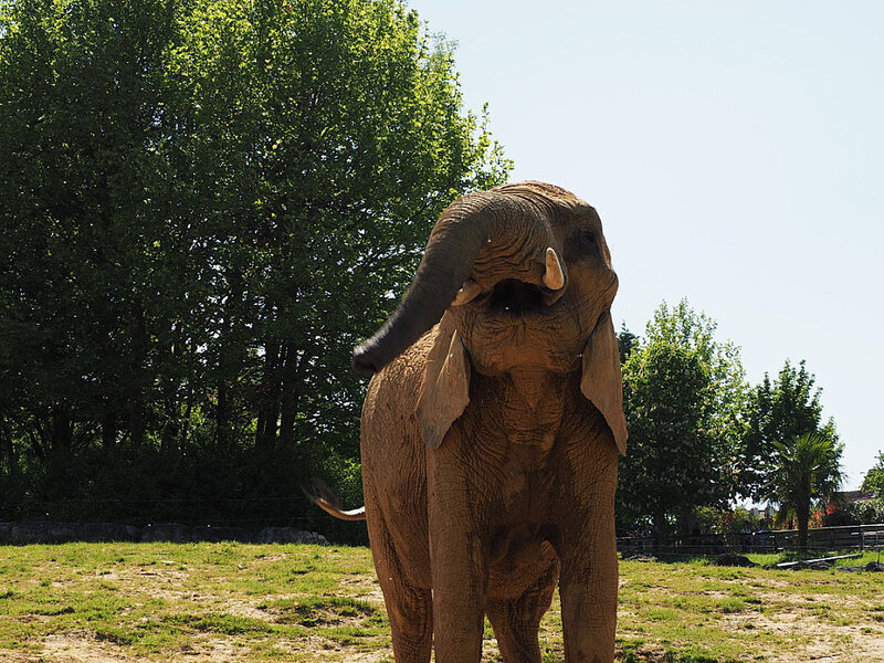zoo-beauval-animaux-elephants-20
