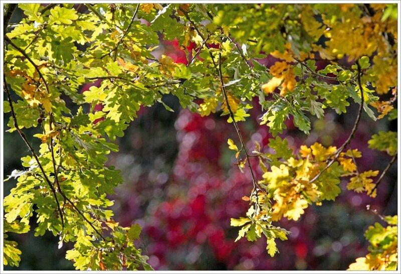 ville automne chene vigne vierge 191016