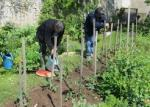 Jardin-de-Felix-Operation-tomates-800x600_visuel_resume