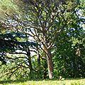 arbre 2 [800x600]