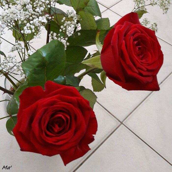 160507_bouquet_roses