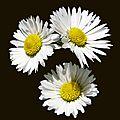 Bouquets...........
