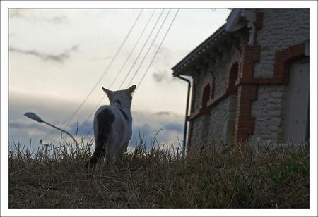 QM_chat_blanc_maison_160709