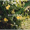 jardin Pamplemousse_71